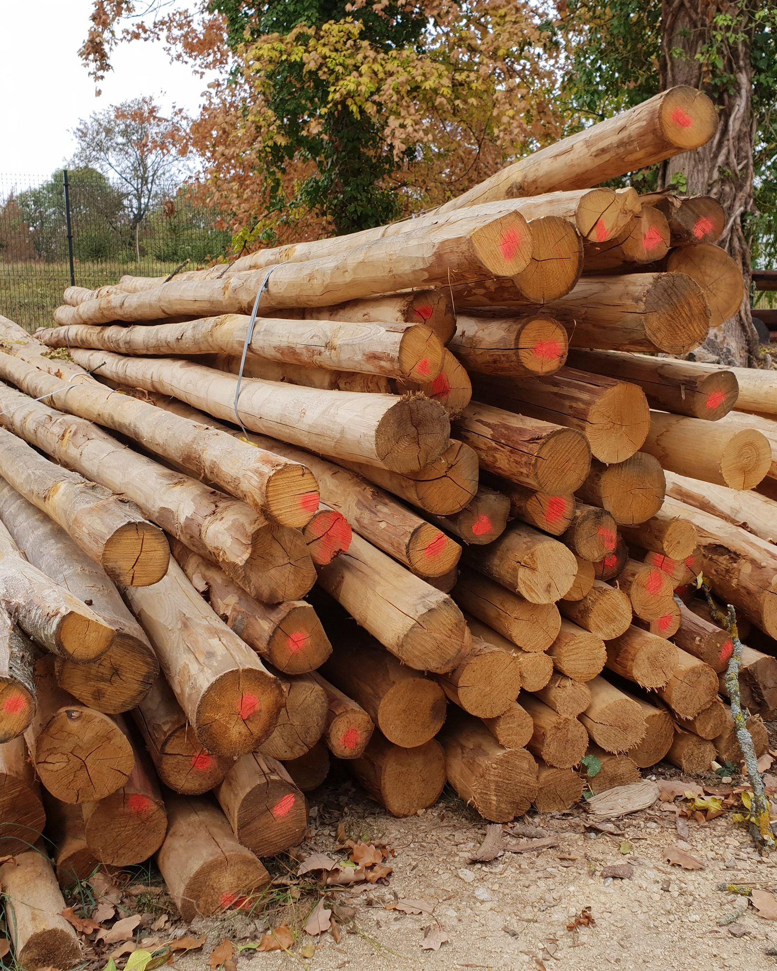 Geliebte Waldprodukte &FW_81